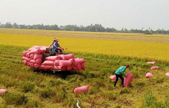 Canh tác lúa gạo bền vứng, phương pháp gạo sạch an toàn cho người dùng