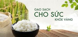 Canh tác lúa gạo bền vững, phương pháp gạo sạch an toàn cho người dùng