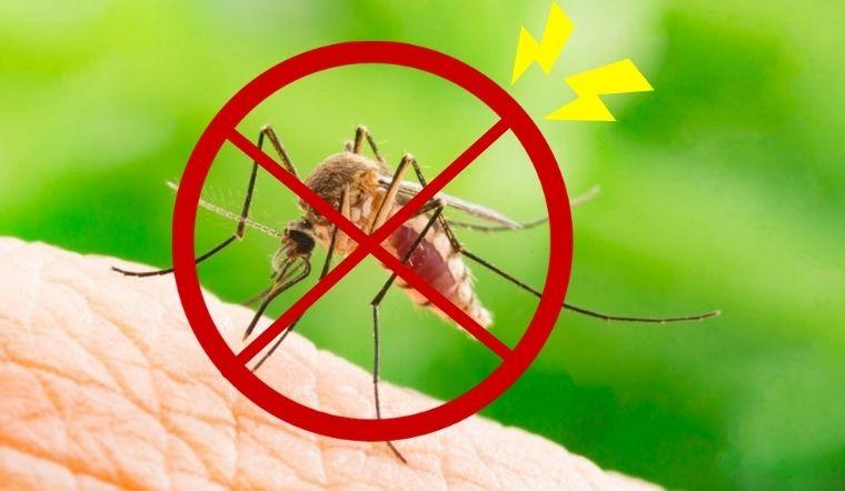 16 cách đuổi muỗi trong phòng ngủ dễ ợt chỉ với vài nguyên liệu sẵn có