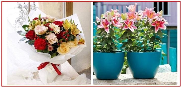 Hoa tươi mang đến hàm ý một năm mới thiệt nhiều điều may mắn, rạng rỡ