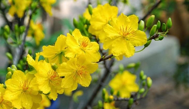 Thay nước cắm hoa mỗi ngày một lần để hoa tươi lâu