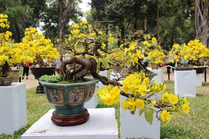 Dáng cây đóng vai trò quan trọng việc chọn mai đẹp