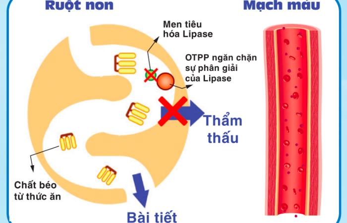 Cơ chế hoạt động của OTPP