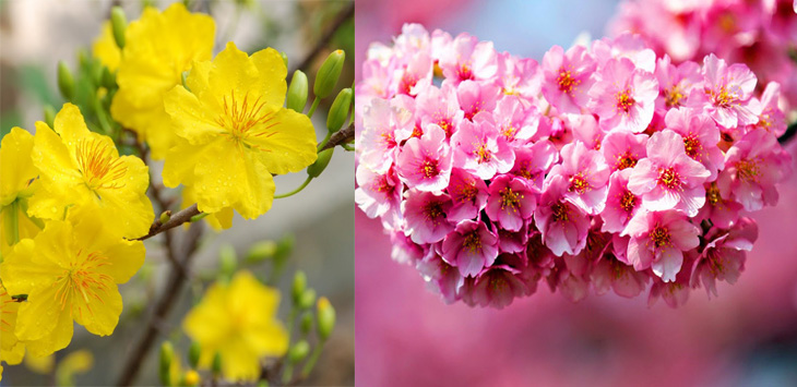 hoa mai, hoa đào ngày tết