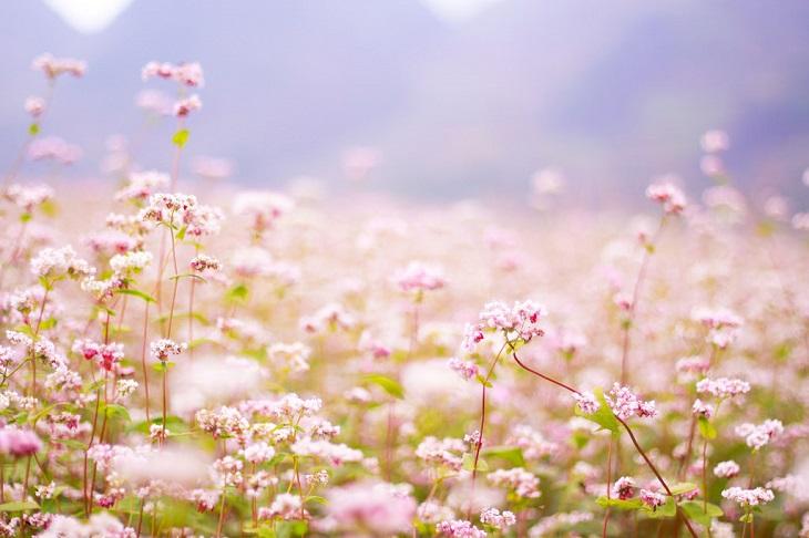 Vì sao mùa xuân, hoa thường nở đẹp?