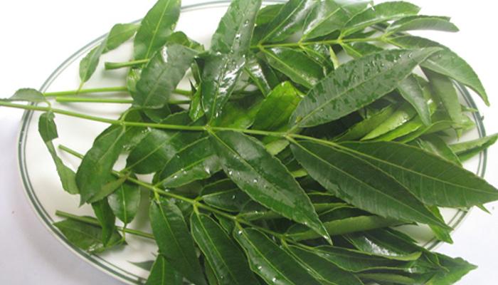 Các loại rau rừng Tây Ninh được giới sành ăn tìm mua ráo riết