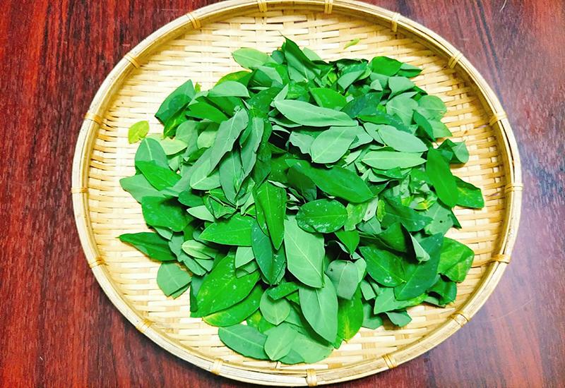 Rau ngót, loại rau dân dã nhưng cực tốt cho sức khỏe