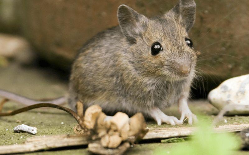 Cư dân mạng thích thú với cách bẫy chuột siêu đơn giản, ít tốn kém nhưng bắt được cả thùng chuột