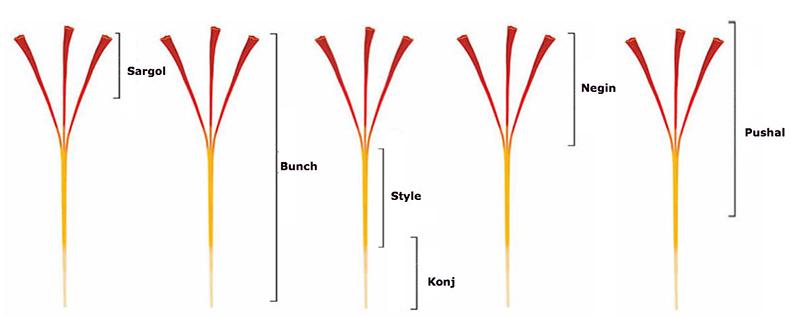 Các loại saffron và cách phân biệt saffron thật giả