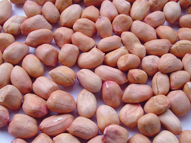 Peanut là gì? Tác dụng của Peanut đối với sức khoẻ
