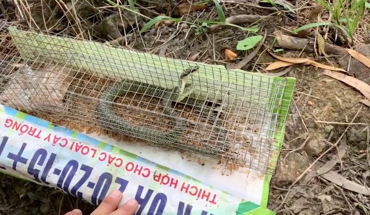 Đường về Trà Vinh p2: Lần đầu đi bắt rắn không ngờ bắt trúng rắn lục cực độc