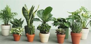 Top 17 loại cây lọc không khí hiệu quả nên trồng, dễ chăm sóc