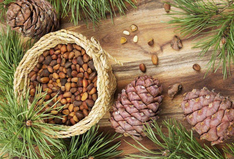 Pine Nut là gì? Những lợi ích mà Pine Nut mang lại cho sức khỏe