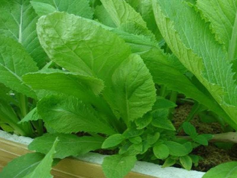 Cách tạo vườn rau xanh sạch & Những loại rau củ dễ trồng ngay tại nhà