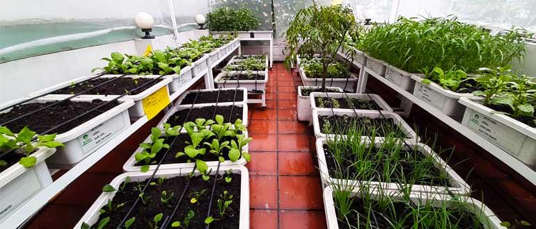 Rau tự trồng có chắc đã an toàn? Cách trồng rau tại nhà an toàn