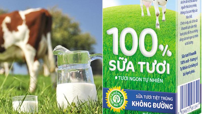 Có bao nhiêu loại sữa tươi và mỗi loại có đặc điểm thế nào?