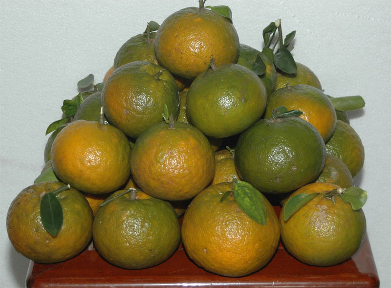 Cách bảo quản trái cây tươi lâu hơn có thể lên đến 3 tháng