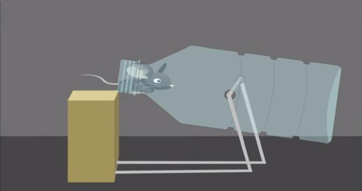 Bẫy chuột tự chế dùng chai nhựa