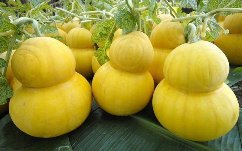 Nhiều loại trái cây lạ mắt hút người dùng dịp tết