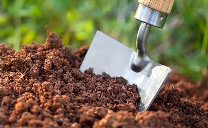 Chuẩn bị chậu và đất trồng mới