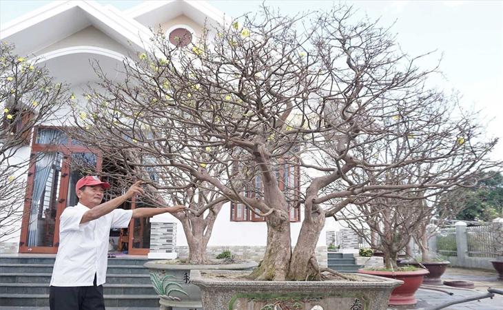 Khi cây đã hồi lại thì bạn đưa cây ra nắng để cây thích nghi dần dần