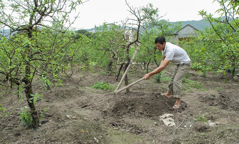 Cần làm đất tơi xốp, lên luống cao khoảng 25-30cm, rộng 70cm