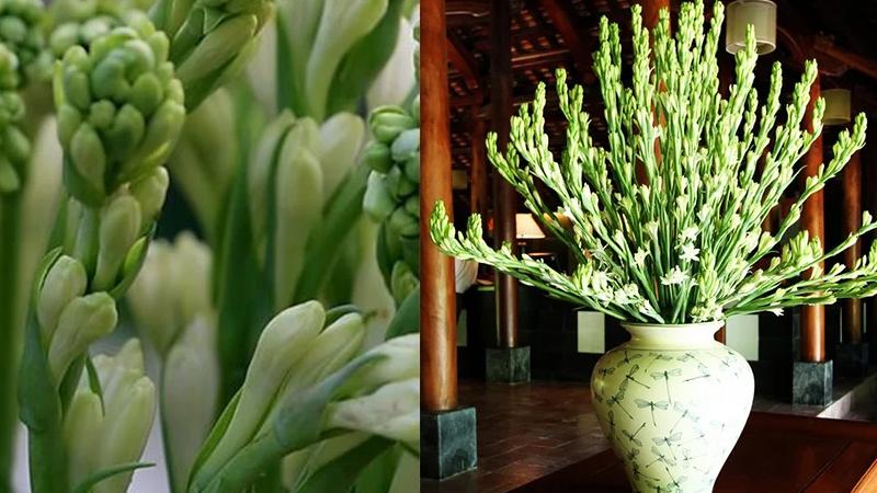 Nên chọn hoa huệ trắng để chưng bàn thờ ngày Tết