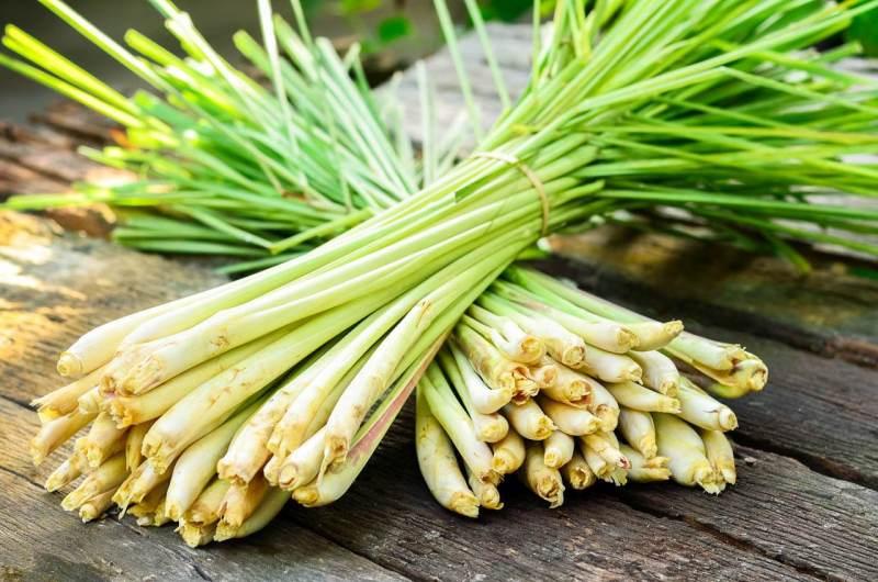 Thực phẩm tăng cường sức đề kháng giúp phòng chống virut