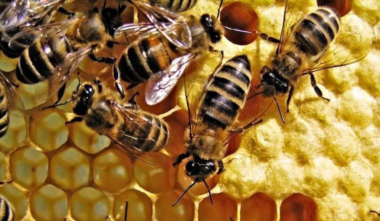 Phân biệt các loại mật ong có mặt trên thị trường hiện nay