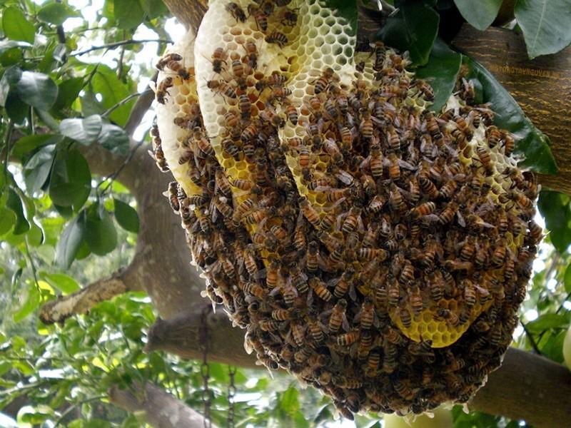 Mật ong hoa nào tốt nhất, ngon nhất?