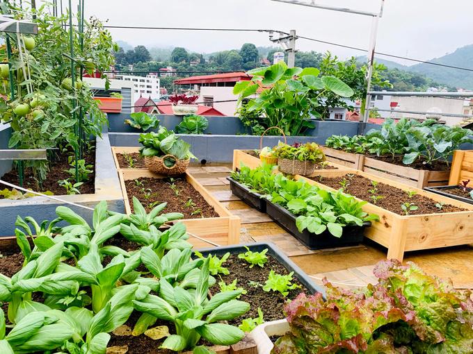 Cách trồng rau muống đơn giản tại nhà