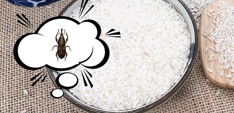 Cách diệt mọt gạo nhanh chóng