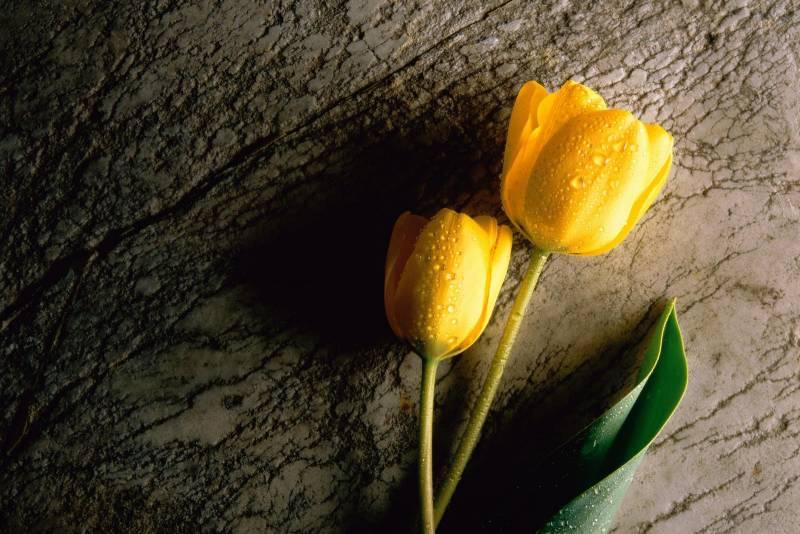 Các loại hoa đẹp và ý nghĩa dành tặng mẹ nhân ngày 8/3