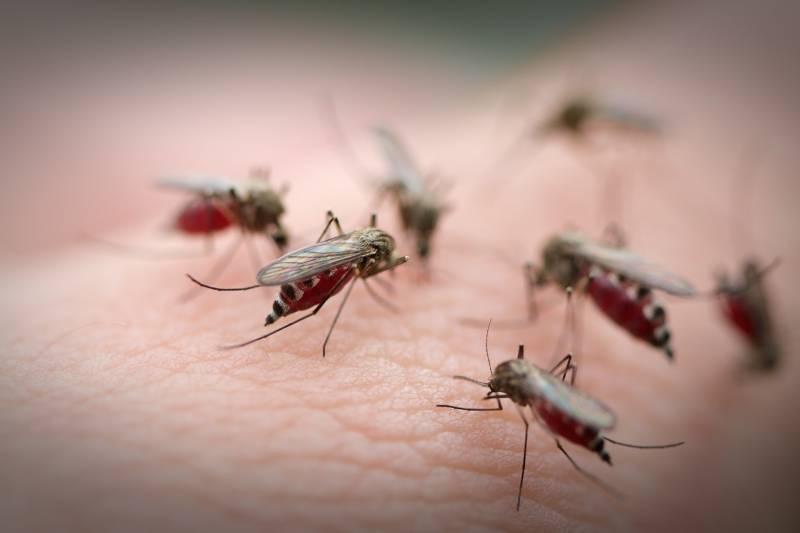 Muỗi là loài côn trùng hút máu