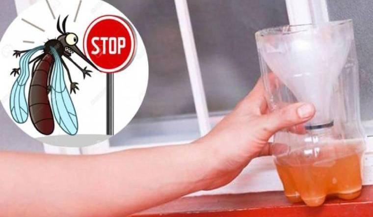 Mẹo khiến muỗi chết cả đàn chỉ với một lon bia