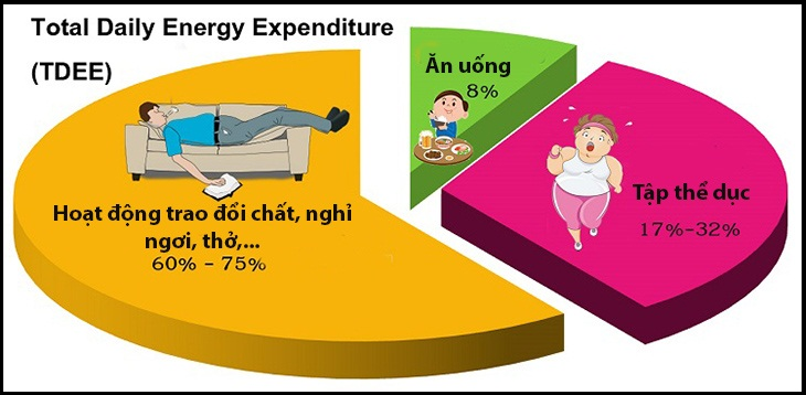 TDEE, viết tắt của Total Daily Energy Expenditure