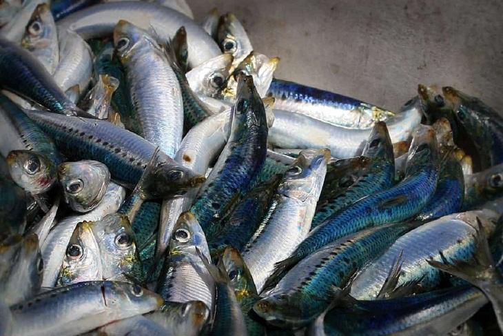 cá mòi thuộc phô mai thuộc trứng thuộc Nhóm thực phẩm giàu cholesterol nên bổ sung