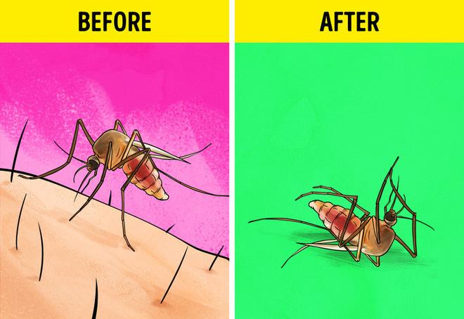 Loại bỏ các loại côn trùng có hại