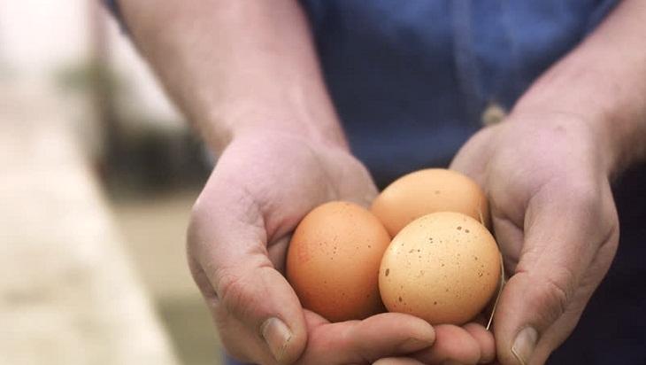 Quan sát vỏ trứng