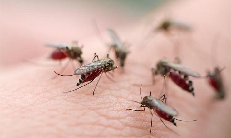 3 cách phòng tránh sốt xuất huyết vào mùa mưa