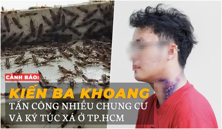 Cảnh báo: Kiến ba khoang tấn công nhiều chung cư và ký túc xá ở TP.HCM