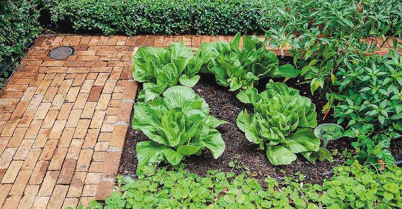 Cách tạo vườn rau xanh sạch - Tận dụng triệt để sân nhỏ hoặc vườn bên cạnh nhà