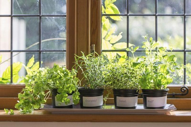 Cách tạo vườn rau xanh sạch - Tận dụng không gian nhà bếp