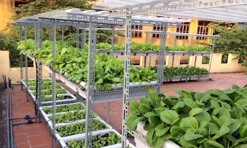 Cách tạo vườn rau xanh sạch - Không gian vườn sân thượng