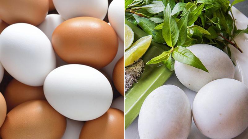Trứng thường và trứng vịt lộn loại nào bổ hơn