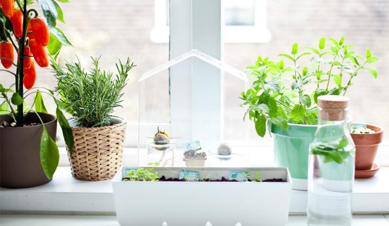10 loại cây trồng trong nhà giúp khử mùi bếp và đuổi côn trùng siêu hiệu quả