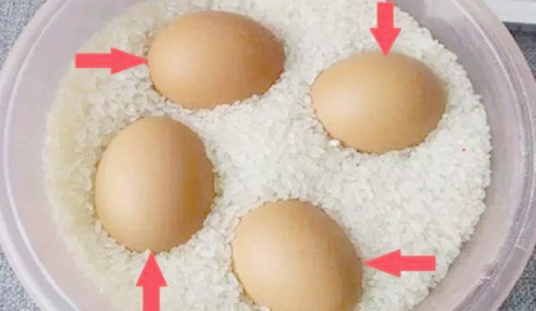 Đặt trứng vào chỗ này thì cả tháng trứng vẫn không bị hỏng