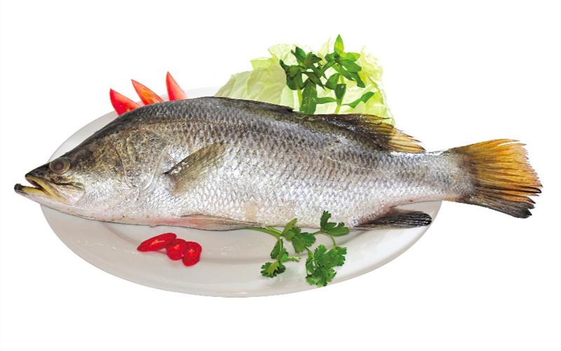 Đặc điểm của các loại cá chẽm