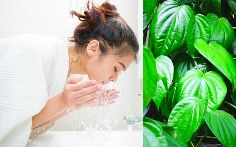 Rửa mặt hàng ngày với nước lá trầu không