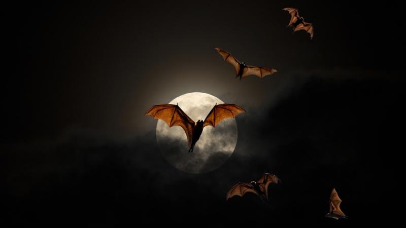 5 ứng dụng và game hấp dẫn đang FREE cho iPhone và iPad, có game nhập vai đế quốc ma cà rồng Vampire Fall